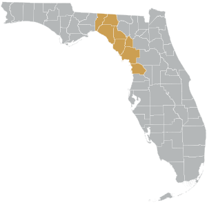 Suncoast Connector Map